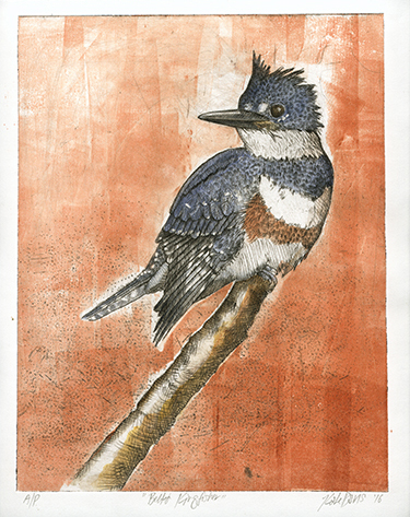 Belted Kingfisher - drypoint etching 2016