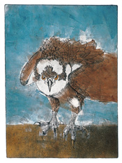 <i>Flipper</i> monotype etching by Kate Davis - selected for the prestigious Leigh Yawkey Woodson Birds in Art Exhibition.