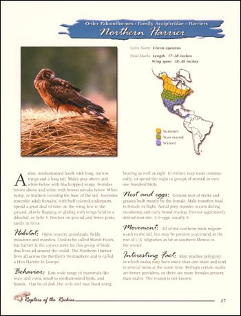 Page 27 - Northern Harrier