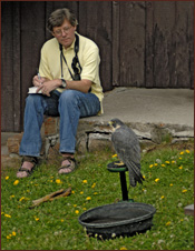 Author and artist, David Sibley does a sketch of Sibley, our Peregrine at a  program at Pine Butte Guest Ranch, with the Nature Conservancy. For nine years, we have been invited to do a program then go bird watching!